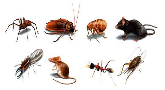 Có nên diệt côn trùng bằng cách sử dụng các sản phẩm hóa học?