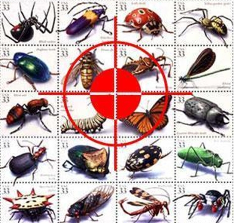 Diệt côn trùng như thế nào thì hiệu quả nhất hiện nay